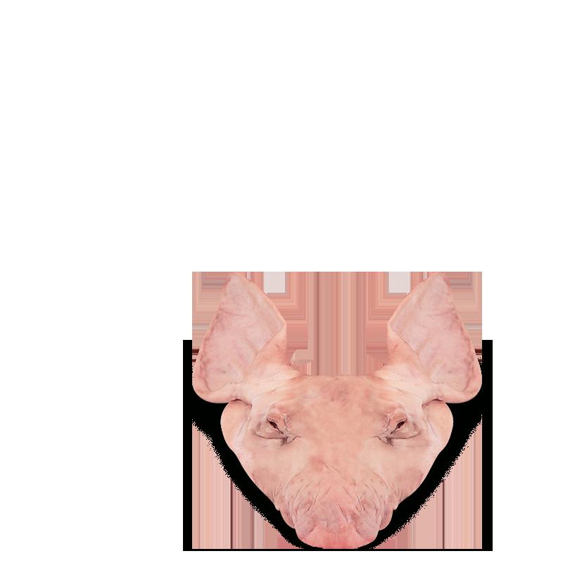 Orelha Suína Com Máscara
